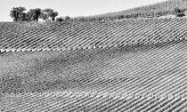 Weinberge Toskana Italien / vineyards landscape Tuscany von Thomas Schaefer