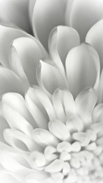 WHITE by Josephine Mayer-Hartmann