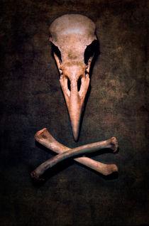 Birdie by Jarek Blaminsky