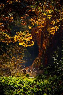 Herbsttag von mroppx