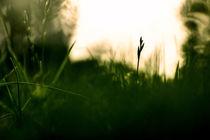 Scharfes Gras von Mathias Karner