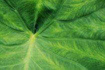 Grünes Blatt von Mathias Karner