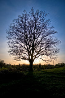 Earth Root von Janis Upitis