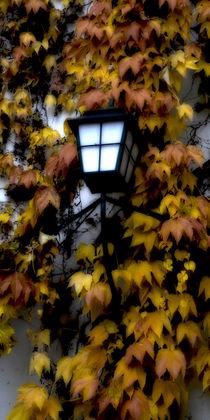 'Herbstlicht - Autumn light' von Chris Berger