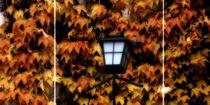 'autumn light - Herbstleuchten' von Chris Berger
