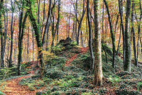 Autumn-fageda-jorda-23