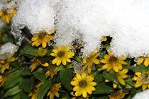 Winterzauber in gelb by Anja  Bagunk