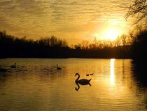 Der Schwanensee by Marion Eckhardt