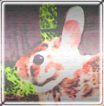 Hopping Bunny von kittymisty