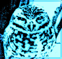 Ice Owl by kittymisty