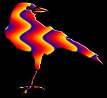 Rainbow Crow von kittymisty