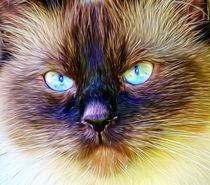 Katzenaugen von Rolf Schweizer