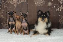 Christmas Time / 6 von Heidi Bollich