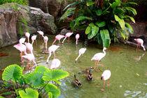 Flamingo Gruppe in idyllischer Naturlandschaft  by mellieha