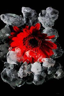 Eisblume von malin