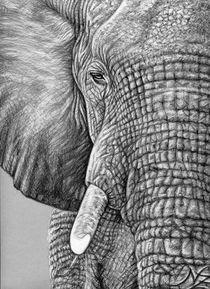 The Elephant - Afrikanischer Elefant von Nicole Zeug