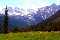Kanada-meadows