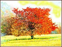 '~ Colorful Tree ~' by Sandra Vollmann