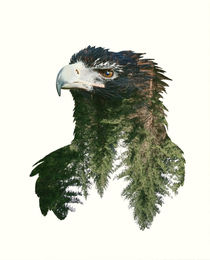 Double Exposure Portraits of Eagle and and Forest by sabina-s