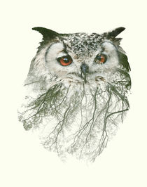 Double Exposure Portraits of Owl and Tree Branch  von sabina-s