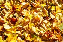 Top view of vivid autumn leaves linden closeup by Vladislav Romensky