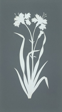 Carnation  by Philipp Otto Runge