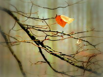 november by hedy beith