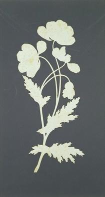 Flower  by Philipp Otto Runge