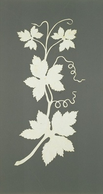 Hop plant  by Philipp Otto Runge