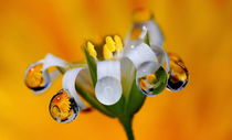 Droplets of tenderness by Yuri Hope