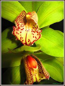 '~ Beautiful Orchidee green ~' von Sandra Vollmann