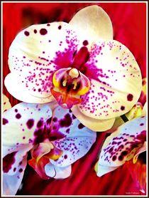 '~Beautiful Flowers~' von Sandra Vollmann