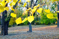 Selective focus on the yellow fall leaves in the foreground by Vladislav Romensky
