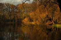 Augenblick vom Herbst-Tag von Wladimir Zarew