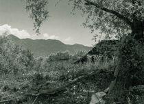Landscape von Raymond Zoller