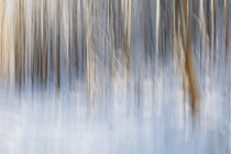 Winter Impressions by Martin Williams
