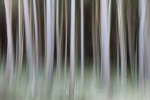 Forbidden Forest von Martin Williams