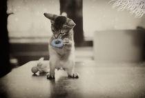 Dsc-4611-dot-abi-kitten2-dot-11-15