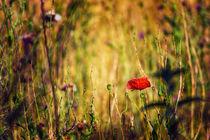 Into the Wild Unknown von Vicki Field