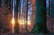 'Last November evening' von Thomas Matzl