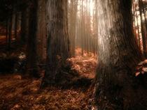 Autumn Slumber von Michael Dalla Costa