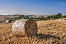 South Downs Harvest by Malc McHugh