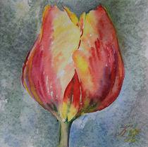 Tulip by Katia Boitsova-Hošek