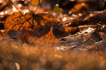 Autumn Bokeh von cinema4design