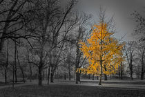 The last yellow Tree Black & White von Gerhard Petermeir