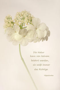 Zitat Natur by darlya