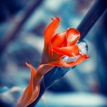 Ginger Flower by cinema4design