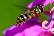 Wasp by Amber D Hathaway Photography