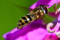 Wasp von Amber D Hathaway Photography
