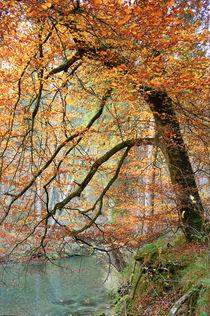 Die Herbstbuche von Thomas Matzl